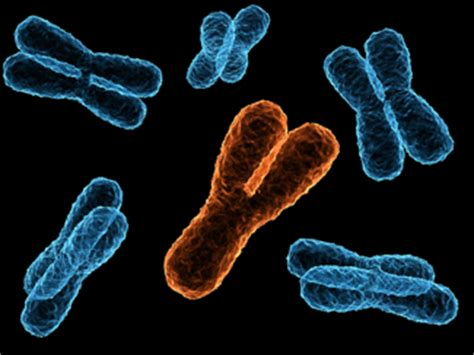 Y Chromosome - Is It, As Some Individuals Suppose, in Danger? Y Chromosome
