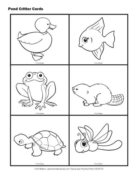 coloring pages of pond animals science cards pond animals pond critter cards pond