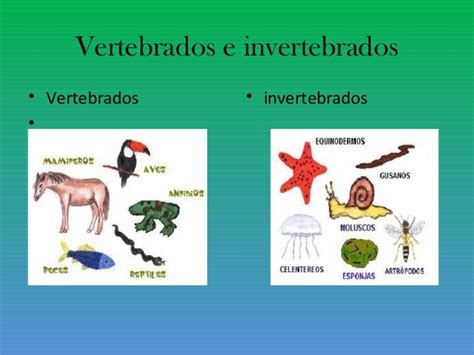 imagenes de animales vertebrados e invertebrados clasificaci 243 n de animales vertebrados e invertebrados