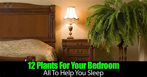Bedroom Plants To Help Sleep 12 Plants For Your Bedroom All To Help You Sleep