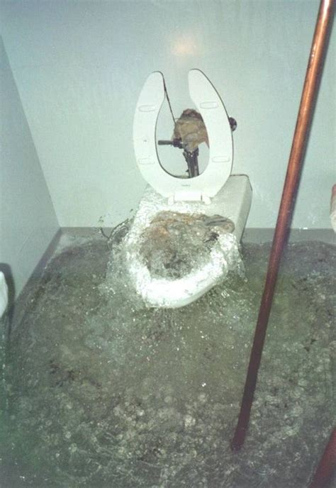 Toilet That Shoots Water Up May 2014 Cat Hair Glitter