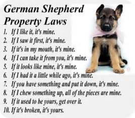 German shepherd puppies for sale german shepherd breeders german