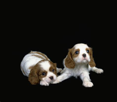 Small Stay At Home Dogs Hd Animals Small Dogs That Stay Small