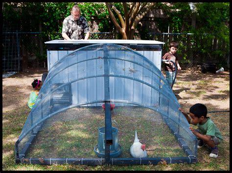 Backyard Chickens Tx Chicken Farming Backyard Chickens In