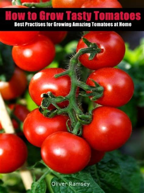 how to grow tasty tomatoes best practices for planting