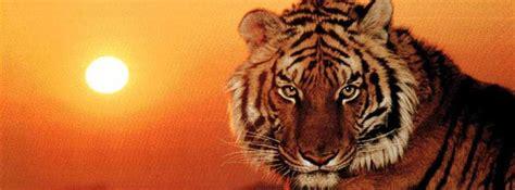 imagenes de leones para portada de facebook portadas de animales para facebook