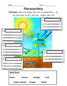 photosynthesis 3rd grade by jennifer caine teachers