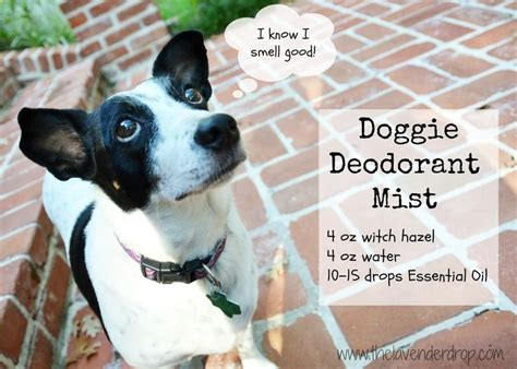 homemade dog shoo for good smell the 25 best stinky dog ideas on pinterest smelly dog