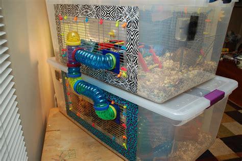 diy bin hamster cage diy hamster cage bin cage hammy happenings