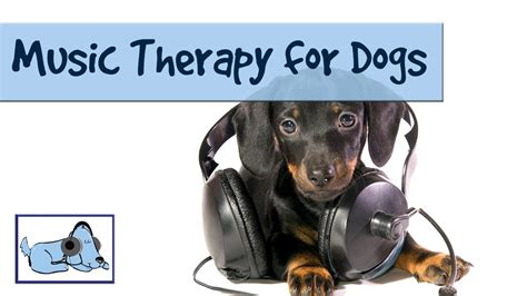 therapy dogs for anxiety therapy for dogs to calm your puppy and reduce anxiety