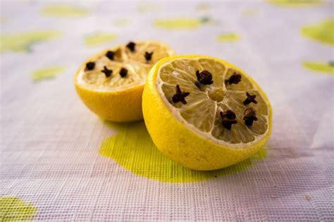 駘iminer moucherons cuisine les 25 meilleures id 233 es de la cat 233 gorie moucherons plantes