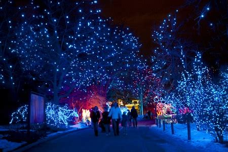 calgary zoo lights admission things to do while on your class