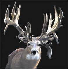 the pt6 nation the most for the bucks part 1 pt6a biggest buck ever shot