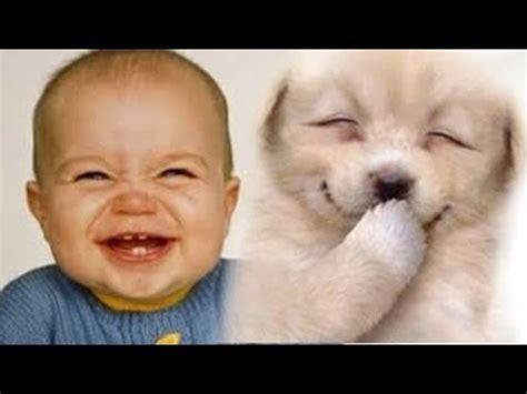 babies laughing at dogs babies laughing at dogs part 2 funnycat tv