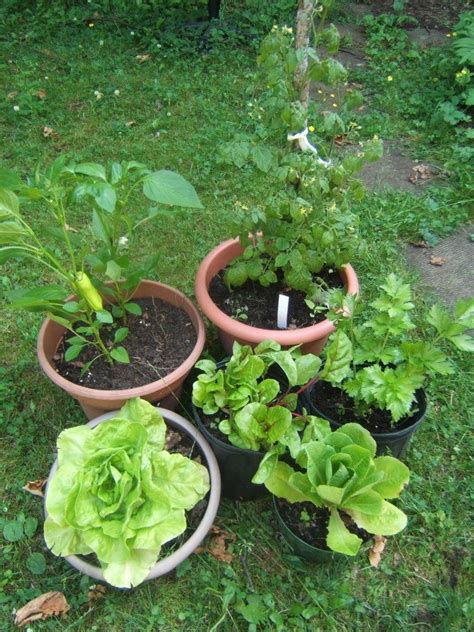 easy container gardening vegetables easy home vegetable crops for container gardening