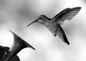 Black Shower Curtain With White Flower Hummingbird In Black And White Photograph By Carol Groenen