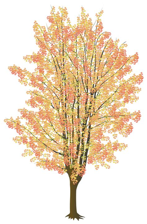 maple tree drawing autumn maple colours vector by noor