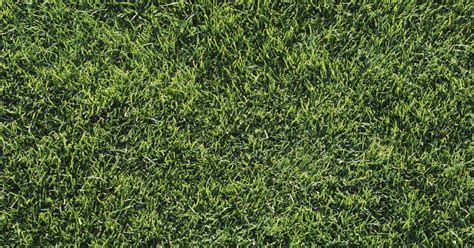 list of types of grass ehow uk
