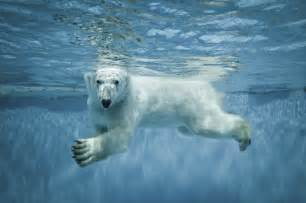Polar bears world celebrates international polar bear day for