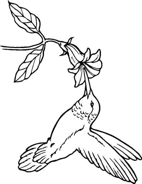 coloring pages for adults hummingbird hummingbird coloring pages google search coloring