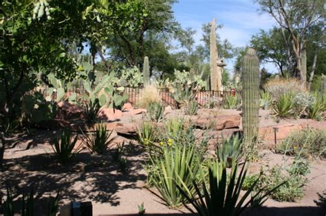 chocolates in ethel m s botanical cactus garden in