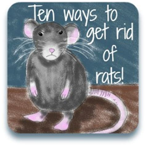 how to get rid of rats from your chicken coop