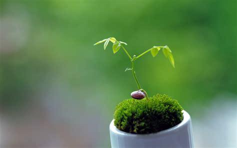 cute plants cute plant wallpaper 41751 1920x1200 px hdwallsource com