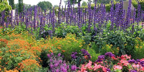 How To Start A Flower Garden 3 Steps For Beginners How To Start A Flower Garden