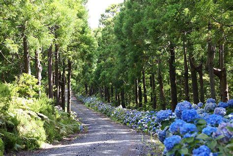 St Mata a floresta e a 193 gua florestas portuguesas