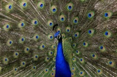 imagenes animales bellos conozca cu 225 les son los animales m 225 s bellos de la tierra