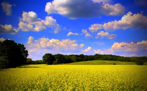 nature wallpaper hd colorful yellow nature and blue sky hd wallpapers colorful for