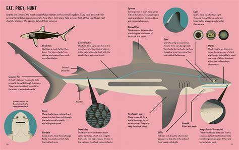 smart about sharks 1909263915 knjiga smart about sharks dizajn svaki dan