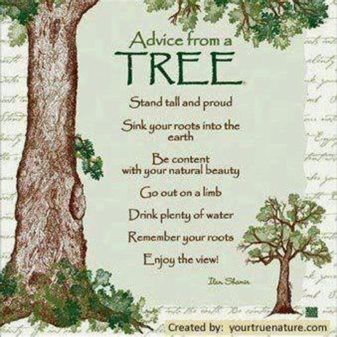 69 Best Trees Quotes Art Amp Words Images On Pinterest Inspirational Quotes On Your Wedding Day