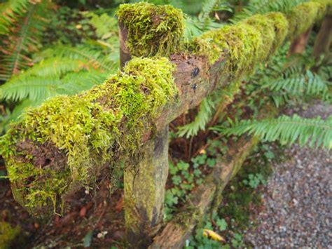 Prehistoric Gardens by Prehistoric Gardens In Oregon S Rainforest Mellzah