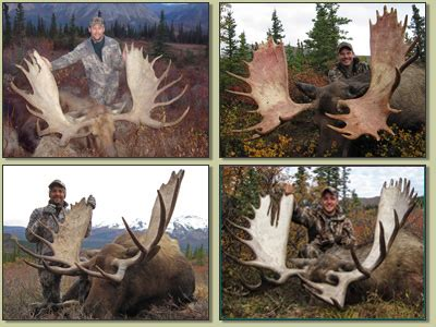 Record Moose Rack by Pics For Gt Big Moose Antlers