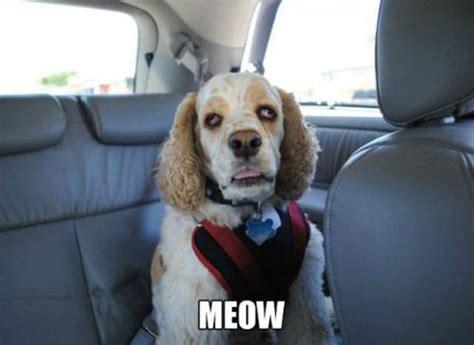 Stoner Dog Meme - stoner dog meme 20 pix of the funny meme based off 10 guy heavy com page 3