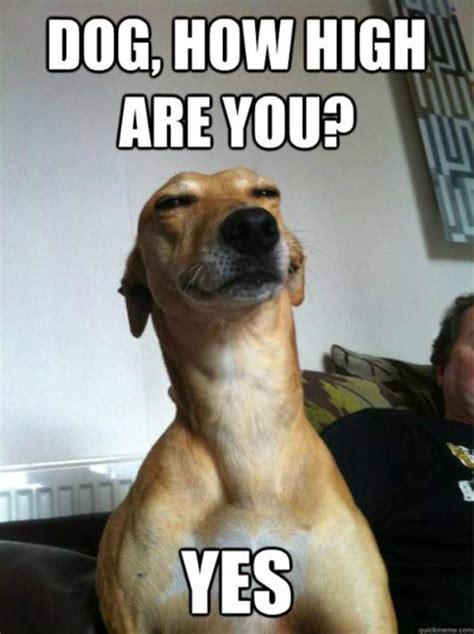 Stoner Dog Meme - stoner dog meme 20 pix of the funny meme based off 10
