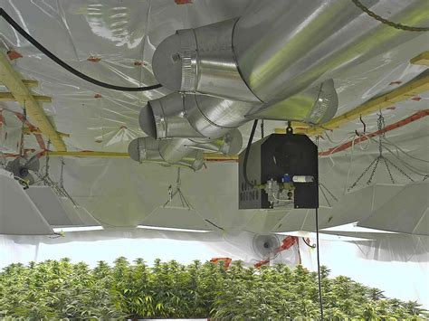grow room lighting requirements how to build the best cannabis grow room growers choice