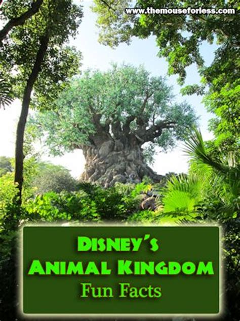 theme park facts animal kingdom theme park fun facts