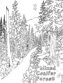 forest coloring pages coniferous forest coloring page coloring page for