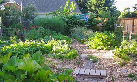 backyard permaculture what is permaculture permaculture gardening principles