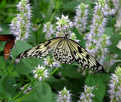 Brookside Gardens Butterfly by 1000 Images About Wings Of Fancy Brookside Gardens On