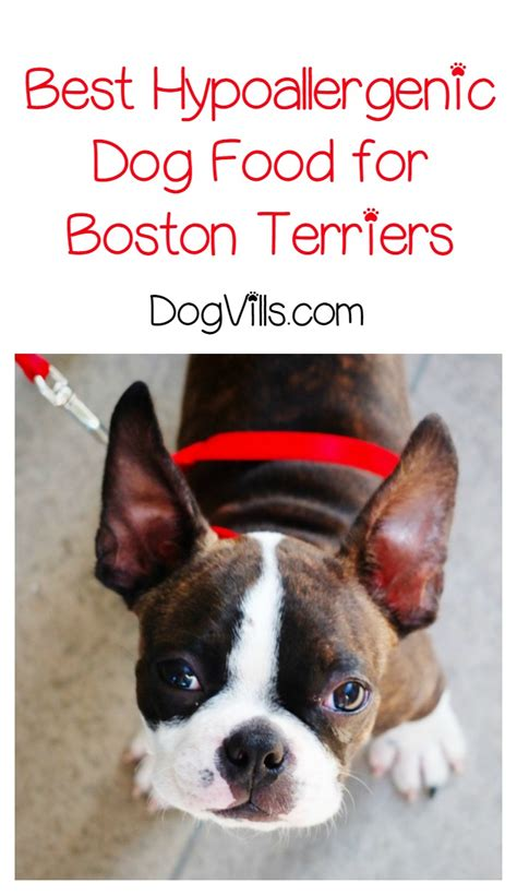 best food for boston terrier puppy what is the best hypoallergenic food for boston terriers