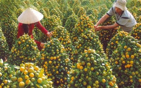 perfect weekend trip awaits  cai mon orchard village