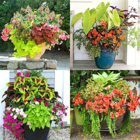 shade plants  gorgeous container garden planting