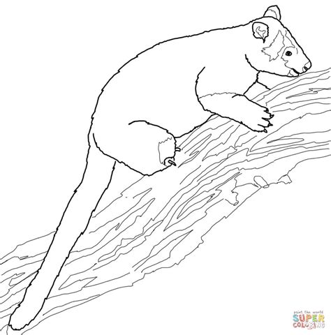 Tree Kangaroo Coloring Page Free Printable Coloring Pages International Tree Coloring Page