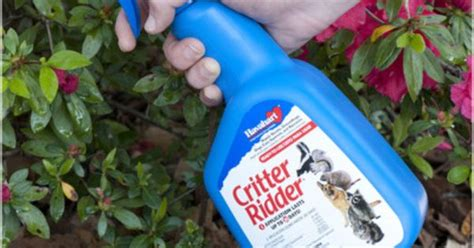 read about squirrel repellant at http squirrelrepellent