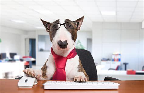 animali in ufficio animali domestici in ufficio italia
