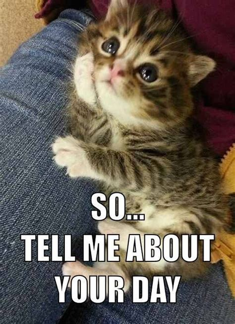 Cat Facts Meme - 20 weird facts about cats you probably didn t know funny