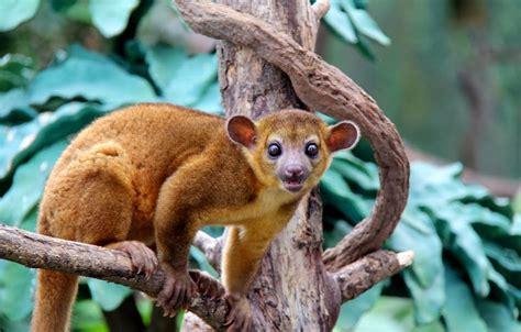 amazon rainforest animals amazon rainforest animals january 2014
